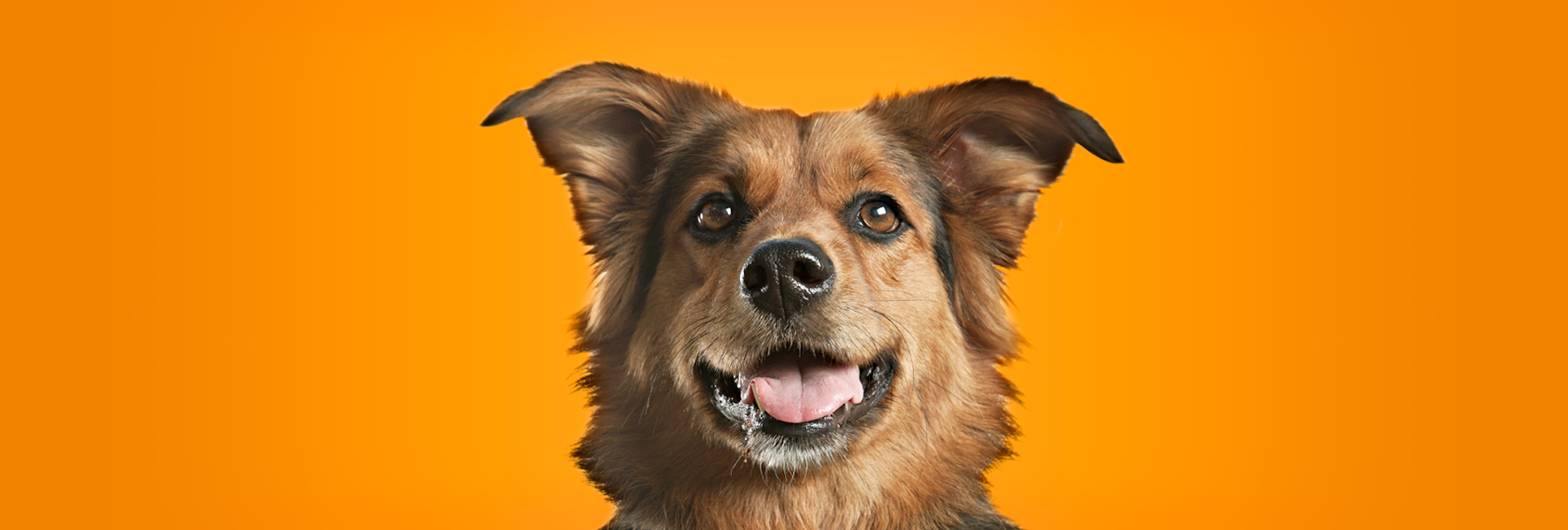 Image: BluePrints Veterinary Marketing Group